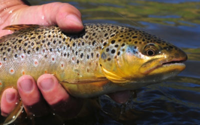 Best Fly Line for Trout 2020 – Distance or Presentation?