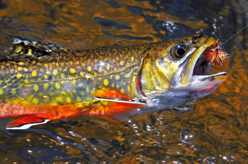 beginner fly fishing tips