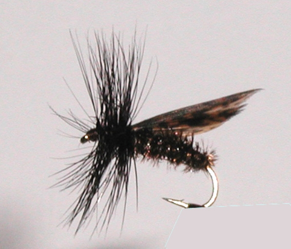 Alder dry fly