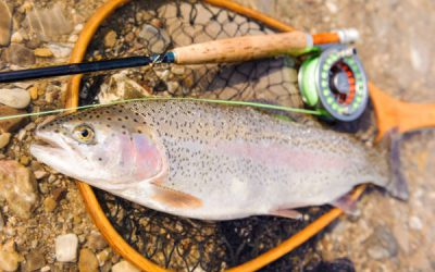 Best Fly Fishing Combos 2021 – Beginners Buying Guide