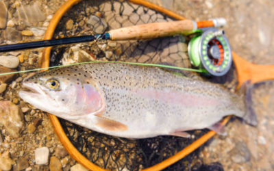 Best Fly Fishing Combos 2019 – Beginners Buying Guide