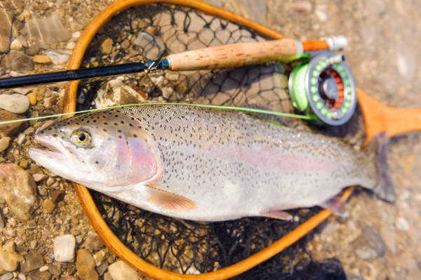 Best Fly Fishing Combos