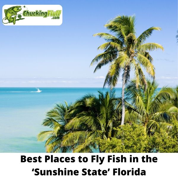 Best Fly Fishing in Florida