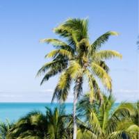Florida Fly Fishing destinations